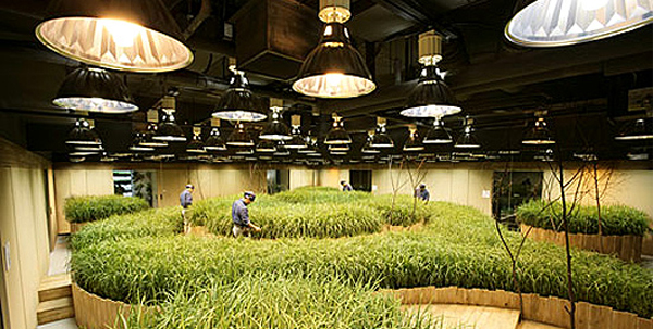 Passona O2 is a subterranean farm underneath a bank building in Tokyo